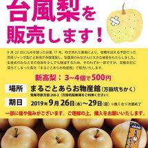 台風で落果した梨を販売します